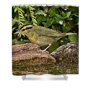 Worm-eating Warbler Shower Curtain