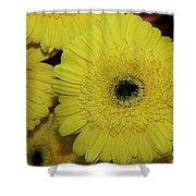 Yellow Gerbers Shower Curtain