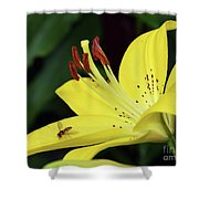 Yellow Lilys Shower Curtain