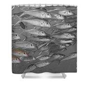 Yellowfin Goatfish Shower Curtain