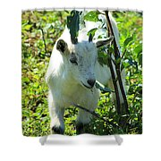Young Goat On A Farm Shower Curtain