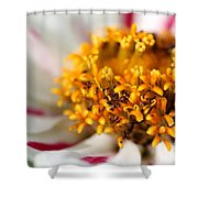 Zinnia Named Zahara Starlight Rose Shower Curtain