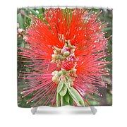 Australia - Red Callistemon Flower Shower Curtain