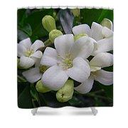 Australia - Gardenia White Flowers Shower Curtain