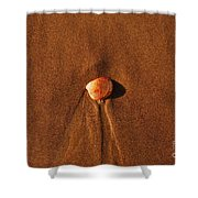 Beach Shell Shower Curtain