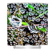 Summer Rams Shower Curtain