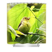 3154 - Tanager Shower Curtain