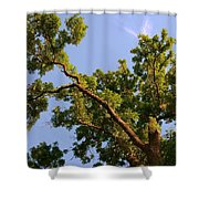 3256 Photography Forest Scene  Shower Curtain