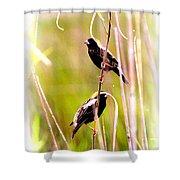 3272 - Bobolink Shower Curtain
