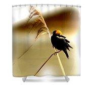 3287 - Bobolink Shower Curtain