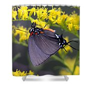 3398 - Butterfly Shower Curtain