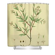 Vintage Botanical Illustration Shower Curtain