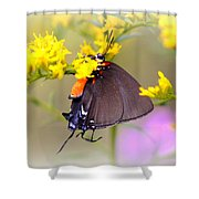 3433 - Butterfly Shower Curtain