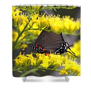3454 - Butterfly Shower Curtain