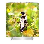 3457 - Bobolink Shower Curtain