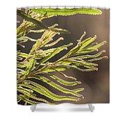 Australian Bush Shower Curtain