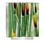 Bamboo Grass Shower Curtain