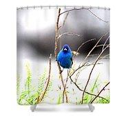 3553-015 - Indigo Bunting Shower Curtain