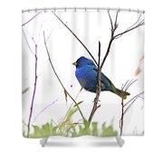 3563-006 - Indigo Bunting Shower Curtain