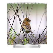 3571 - Tanager Shower Curtain