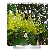Australia - Pollinating A Green Leionema Flower Shower Curtain