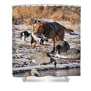 Duck And Goose Hunting Stock Photo Image Shower Curtain