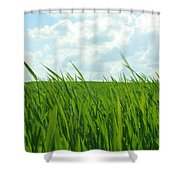 38744 Nature Grass Shower Curtain