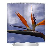 Australia - Bird Of Paradise On Blue Shower Curtain