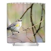 Birds Shower Curtain