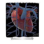 3d Rendering Of Human Heart Shower Curtain