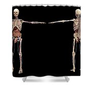 3d Rendering Of Human Skeleton Shower Curtain