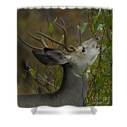 3x3 Buck Mule Deer-signed-#9716 Shower Curtain