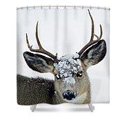 3x3 Mule Deer Buck-signed-#8800 Shower Curtain