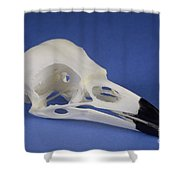 American Crow Skull Shower Curtain