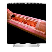 Anatomy Of A Vein Shower Curtain