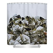 4 And 20 Blackbirds Shower Curtain