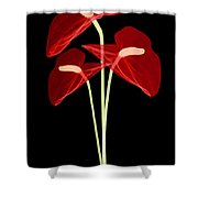 Anthurium Flowers, X-ray Shower Curtain
