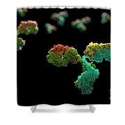 Antibody 1igt Shower Curtain