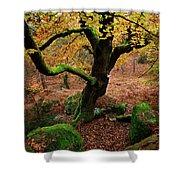 Beech Tree Shower Curtain