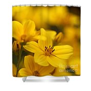 Bidens Named Peter's Gold Carpet Shower Curtain