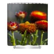 Blurred Seasonal Flower With Dark Background Shower Curtain