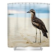 Bush Stone-curlew Resting On The Beach. Shower Curtain