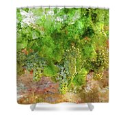 Chardonnay Grapes Close Up Shower Curtain