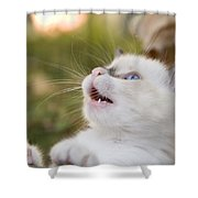 Cute 2 Month Old White Kitten Shower Curtain