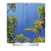 4- Cypress Trees Shower Curtain