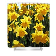 Daffodils In The Sunshine Shower Curtain