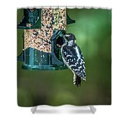 Downy Woodpecker In The Wild Shower Curtain