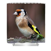 European Goldfinch Bird Close Up   Shower Curtain
