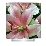 Flower Collection Shower Curtain