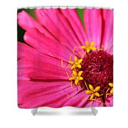 Fuchsia Pink Zinnia From The Whirlygig Mix Shower Curtain